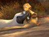 duck-duck-goose-14